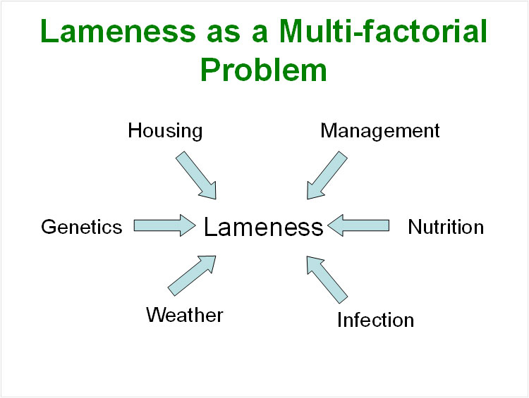 Lameness is Multifactorial