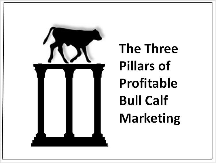 Three Pillars of Bull Calf Marketing