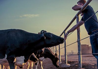 CDQAP Ruminations: How stockmanship training for employees can improve your bottom line