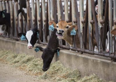 CDQAP Ruminations: Efficient Compliance with New Medicated Feed Rules